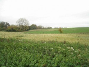 Cheesedown, near Deane.  Did Lizzie wander these fields as a young girl?